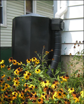 Rain barrel near flower bed connected to downspout