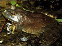 Photo of frog in bogs